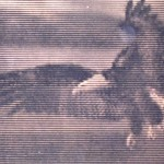 Litografia di una fotografia di un'aquila rd arredamenti